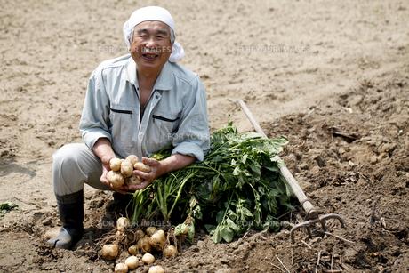 じゃが芋の収穫の写真素材 [FYI00039883]