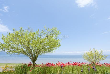 5月の琵琶湖風景の写真素材 [FYI00040361]