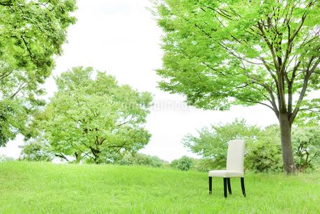 公園と椅子の写真素材 [FYI00040370]