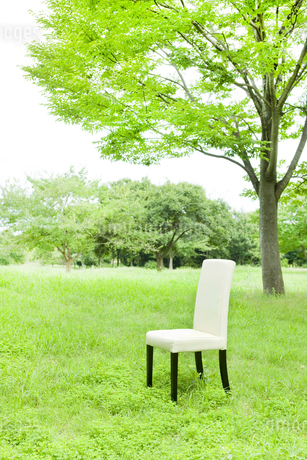 公園と椅子の写真素材 [FYI00040372]