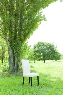 公園と椅子の写真素材 [FYI00040374]
