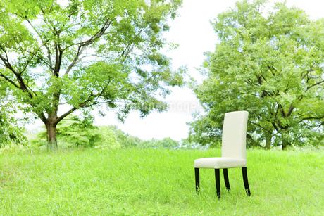 公園と椅子の写真素材 [FYI00040375]