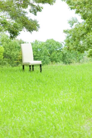 公園と椅子の写真素材 [FYI00040376]