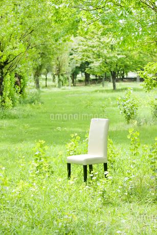公園と椅子の写真素材 [FYI00040381]