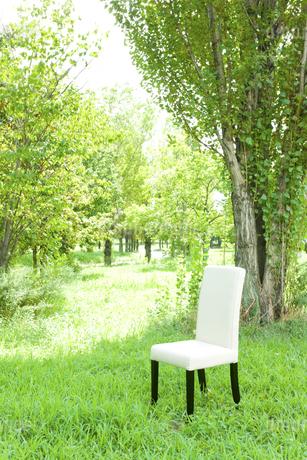 公園と椅子の写真素材 [FYI00040382]