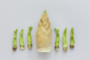 タケノコとたらの芽の写真素材 [FYI00040441]