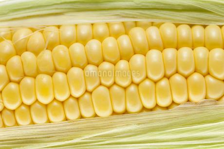 トウモロコシの写真素材 [FYI00040815]