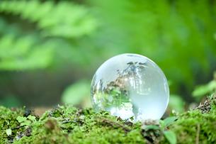 森林の中の地球儀の写真素材 [FYI00040845]