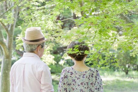 散歩する老夫婦の写真素材 [FYI00041062]