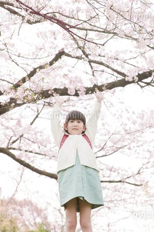 桜と1年生の写真素材 [FYI00041281]
