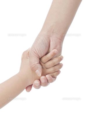 手を繋ぐ親子の写真素材 [FYI00041370]