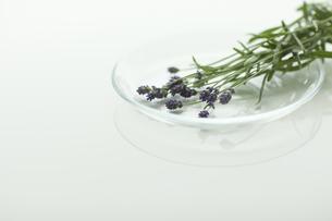 ラベンダーの花の写真素材 [FYI00041625]