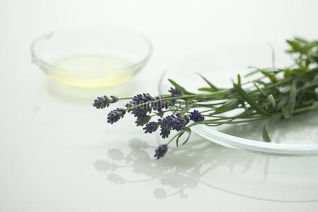 ラベンダーの花とアロマオイルの写真素材 [FYI00041628]