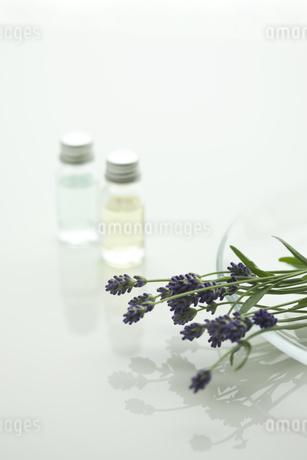 ラベンダーの花とアロマオイルの写真素材 [FYI00041631]