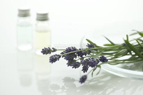 ラベンダーの花とアロマオイルの写真素材 [FYI00041633]