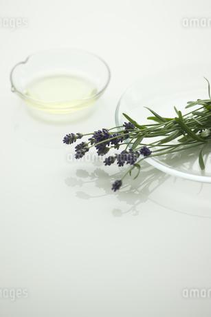 ラベンダーの花とアロマオイルの写真素材 [FYI00041639]