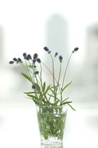 ラベンダーの花とアロマオイルの写真素材 [FYI00041643]
