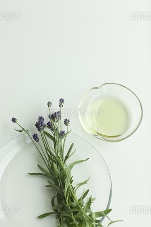ラベンダーの花とアロマオイルの写真素材 [FYI00041646]