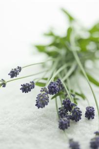 ラベンダーの花の写真素材 [FYI00041669]