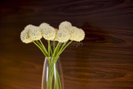 花瓶に挿してある花の写真素材 [FYI00041994]