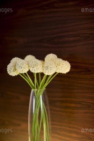 花瓶に挿してある花の写真素材 [FYI00042012]
