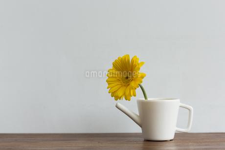 ガーベラの花の写真素材 [FYI00042147]