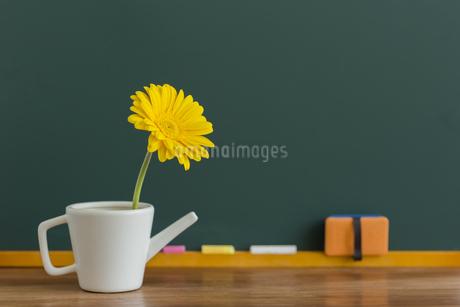 黒板とガーベラの花の写真素材 [FYI00042162]