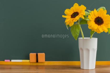 黒板とヒマワリの写真素材 [FYI00042200]