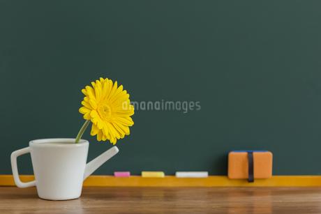 黒板とガーベラの花の写真素材 [FYI00042205]
