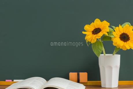 黒板とヒマワリの写真素材 [FYI00042217]