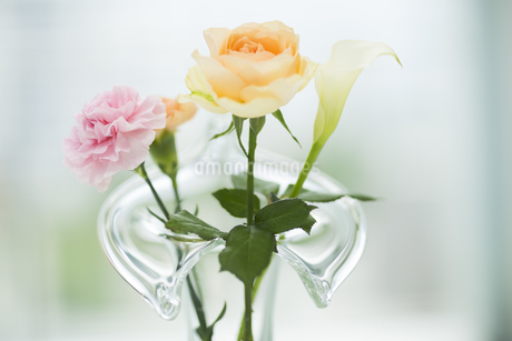 花瓶に挿している花の写真素材 [FYI00042316]