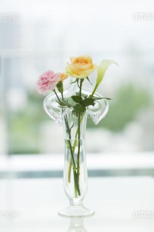 花瓶に挿している花の写真素材 [FYI00042317]