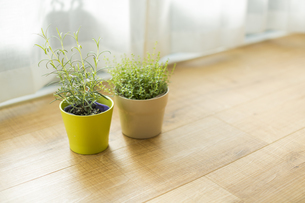 部屋の中にある観葉植物の写真素材 [FYI00042489]