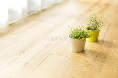 部屋の中にある観葉植物の写真素材 [FYI00042494]