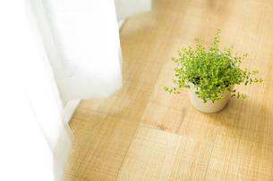 部屋の中にある観葉植物の写真素材 [FYI00042497]
