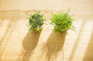 部屋の中にある観葉植物の写真素材 [FYI00042499]