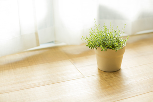 部屋の中にある観葉植物の写真素材 [FYI00042503]