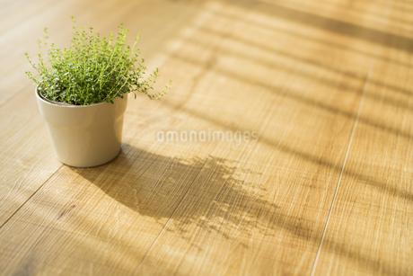 部屋の中にある観葉植物の写真素材 [FYI00042504]