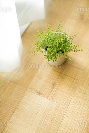 部屋の中にある観葉植物の写真素材 [FYI00042505]