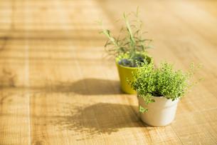 部屋の中にある観葉植物の写真素材 [FYI00042506]