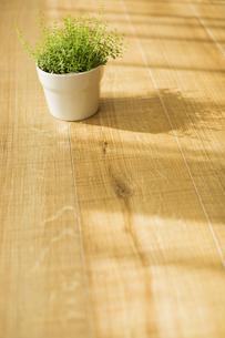 部屋の中にある観葉植物の写真素材 [FYI00042508]