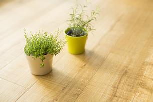 部屋の中にある観葉植物の写真素材 [FYI00042509]