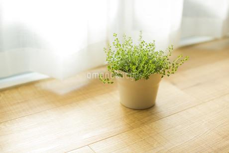 部屋の中にある観葉植物の写真素材 [FYI00042512]