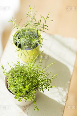 部屋の中にある観葉植物の写真素材 [FYI00042513]