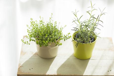 部屋の中にある観葉植物の写真素材 [FYI00042514]