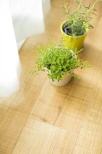 部屋の中にある観葉植物の写真素材 [FYI00042516]