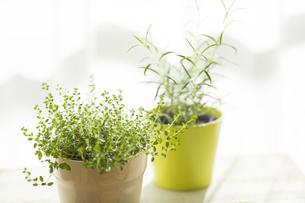 部屋の中にある観葉植物の写真素材 [FYI00042520]