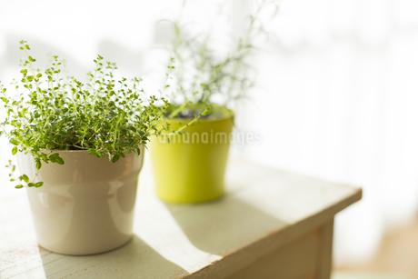 部屋の中にある観葉植物の写真素材 [FYI00042523]