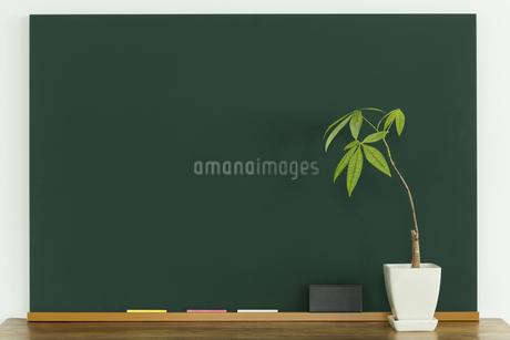 黒板と観葉植物の写真素材 [FYI00042640]