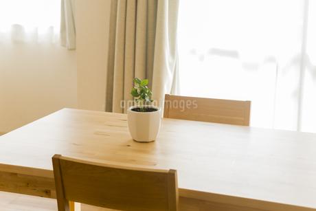 テーブルの上にある観葉植物の写真素材 [FYI00042652]